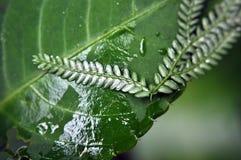 piante Immagini Stock