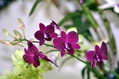 piante Fotografie Stock