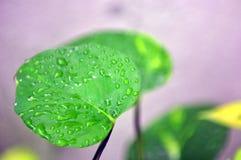 piante Fotografia Stock