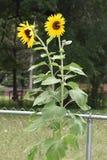 piante Fotografia Stock Libera da Diritti