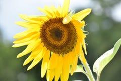 piante Immagine Stock Libera da Diritti