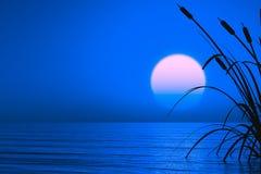 Piante acquatiche al tramonto Immagine Stock Libera da Diritti