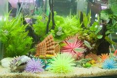 Piante acquatiche in armadietto di vetro Fotografia Stock