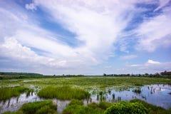 Piante acquatiche e cielo blu Fotografia Stock