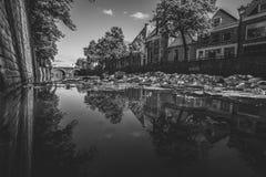 Piante acquatiche naturalmente crescenti in un canale olandese della città con flowin fotografie stock libere da diritti