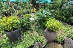 Piante allo zoo di Saigon ed ai giardini botanici Fotografia Stock Libera da Diritti