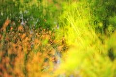 Piante alte che crescono in un giardino botanico Fotografia Stock