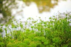 Piante alte che crescono in un giardino botanico Immagini Stock