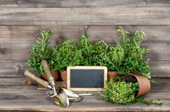 Piante aromatiche dell'origano del timo dei rosmarini degli ingredienti alimentari Immagini Stock