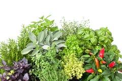 Piante aromatiche fresche Immagini Stock