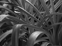 Piante astratte in bianco e nero fotografia stock