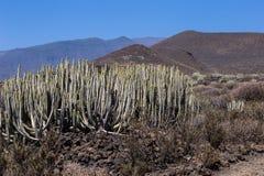 Piante calme del cactus davanti alle colline vulcaniche dell'isola di Tenerife, canarino, Spagna fotografie stock libere da diritti