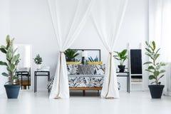 Piante in camera da letto botanica fotografia stock libera da diritti