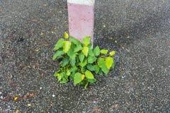 Piante che crescono accanto ai pali di elettricità Fotografia Stock