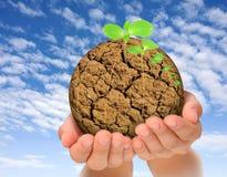 Piante che crescono dal pianeta seccato in mani Fotografia Stock Libera da Diritti