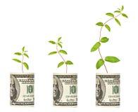 Piante che crescono dalla banconota in dollari fotografia stock libera da diritti
