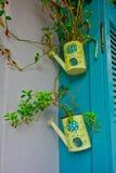 Piante che crescono in latte d'innaffiatura gialle, Grecia immagine stock libera da diritti