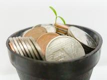 Piante che crescono sui soldi in vaso nero Immagini Stock