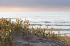 Piante che crescono sulla duna di sabbia Fotografia Stock Libera da Diritti