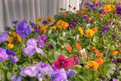 Piante che crescono in un Garden Center nel Minnesota fotografia stock libera da diritti