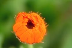 Piante con i fiori del tipo di margherita fotografia stock libera da diritti
