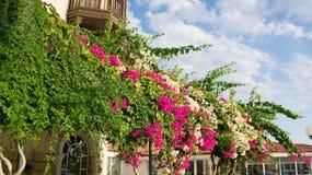 Piante con i fiori rosa e bianchi sul tetto Immagine Stock Libera da Diritti