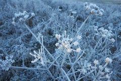 Piante congelate Fotografia Stock