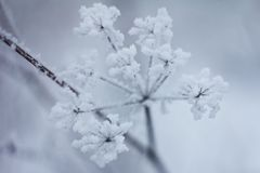 Piante congelate, fondo di inverno Immagine Stock Libera da Diritti