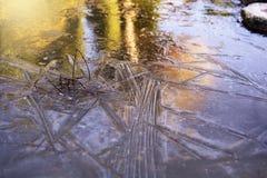 Piante congelate in uno stagno nell'inverno fotografie stock libere da diritti