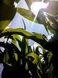 Piante contro il cielo Fotografie Stock