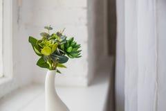 Piante d'appartamento domestiche Pianta del succulente del cactus dell'aloe piccole piante sul davanzale Chiuda su di piccolo suc Fotografia Stock Libera da Diritti