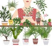 Piante d'appartamento e fiori isolati degli oggetti in vasi differenti e fotografie stock