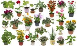 Piante da appartamento e fiori dell'interno messi Fotografie Stock Libere da Diritti