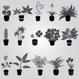 Piante da appartamento e fiori domestici nella gradazione di grigio del vaso Immagine Stock