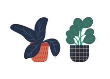 Piante da appartamento in vasi messi, flora isolata dei fiori illustrazione vettoriale