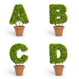 piante da vaso della fonte 3D Fotografia Stock Libera da Diritti
