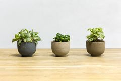 Piante da vaso sulla tavola di legno Fotografia Stock Libera da Diritti
