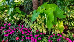 Piante decorative in giardino botanico fotografie stock