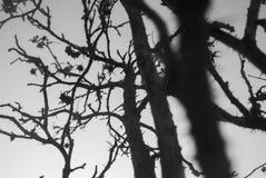 Piante dei cinorrodi Bello fondo delle piante Fiore coperto di spine triste e mistico Pianta contro il cielo Pianta di frattale fotografia stock