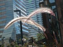Piante dei quartieri alti Fotografia Stock Libera da Diritti