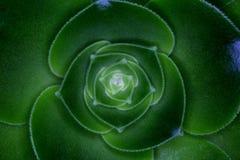 Piante dei succulenti Fotografia Stock Libera da Diritti