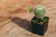 Piante del cactus e spazio della copia, stile d'annata Fotografia Stock Libera da Diritti