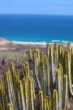 Piante del cactus a Fuerteventura Fotografie Stock Libere da Diritti