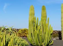Piante del cactus nel giardino del cactus Fotografia Stock