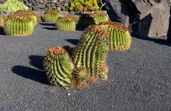 Piante del cactus nel giardino del cactus Immagini Stock Libere da Diritti