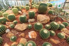 Piante del cactus, piante del deserto, natura Fotografie Stock Libere da Diritti