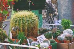 Piante del cactus su esposizione al mercato della città Immagine Stock