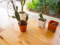 Piante del cactus sulla tavola Stile dell'annata Fotografie Stock