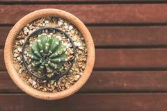 Piante del cactus in vaso di fiore Fotografia Stock
