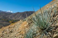 Piante del deserto che crescono nei terreni incolti aridi Immagini Stock